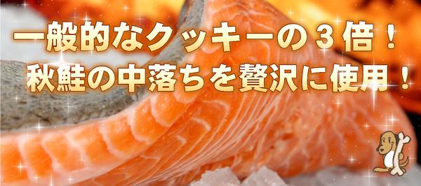 秋鮭の中落ちを贅沢に使用